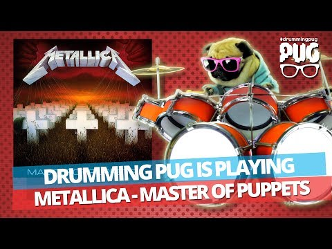 Drumming Pug - Metallica Master Of Puppets