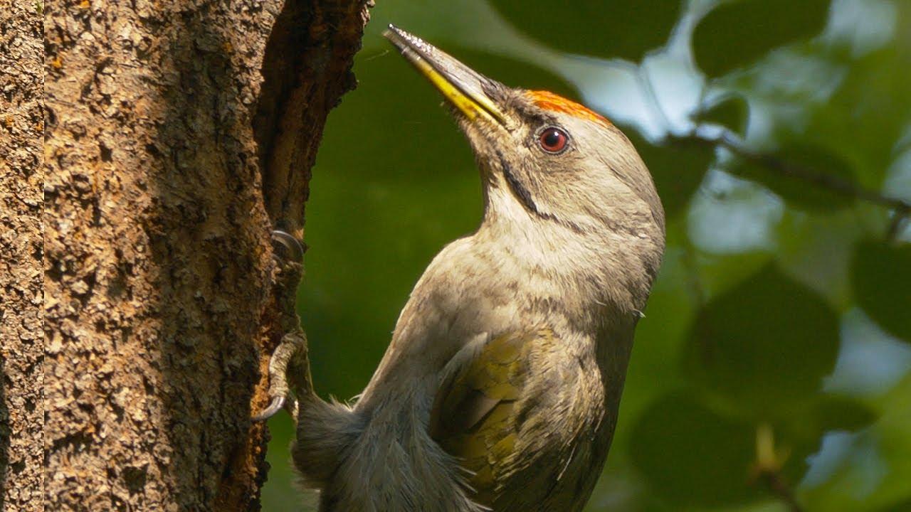뚜다다다다!! 소리로 존재감을 알리는 새, 청딱다구리입니다!
