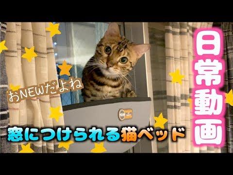 外を見たい猫と窓とベッドと