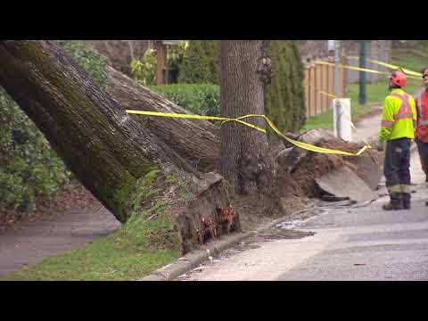 B.C. windstorm leaves nearly 200,000 customers without power