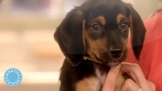 How to Choose the Right Dog for Your Family - Martha Stewart