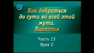 Биология для чайников. Урок 12. Органы чувств: осязание, обоняние, вкус, зрение, слух