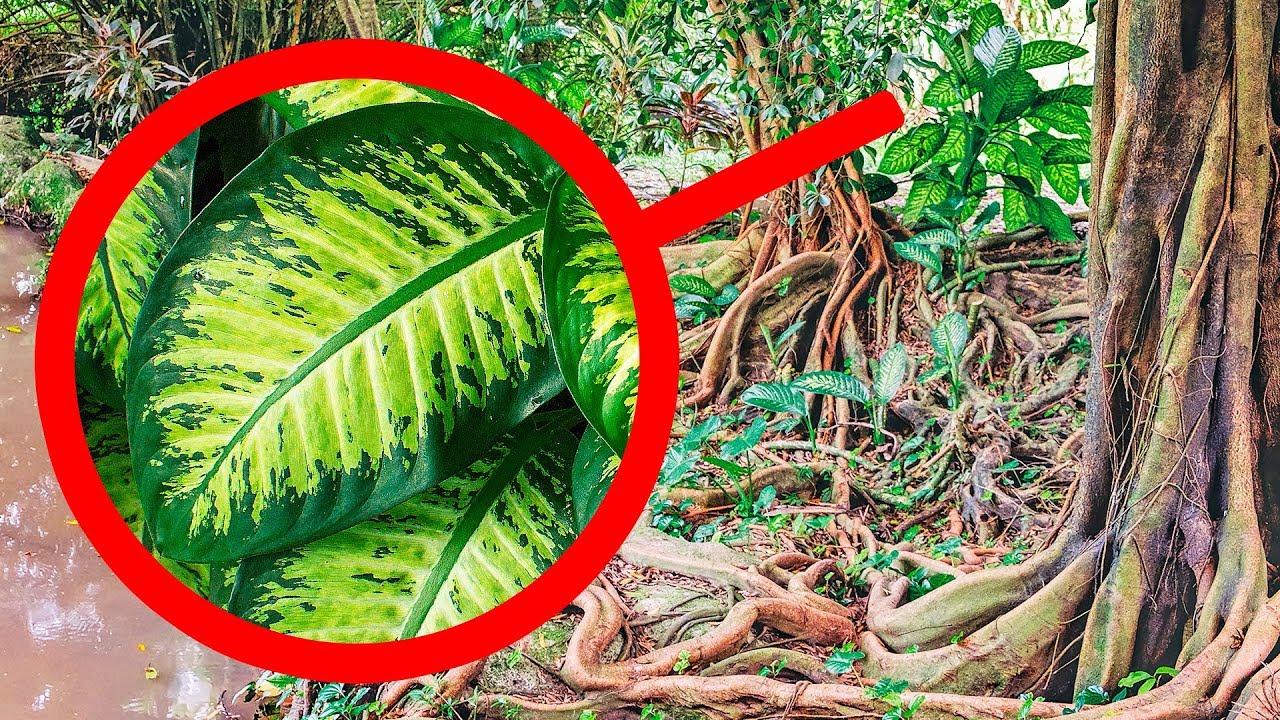 Никогда Не Трогайте Это Растение