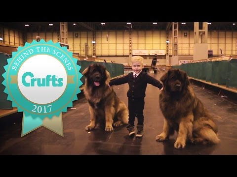Little Kids and Big Dogs | Crufts 2017