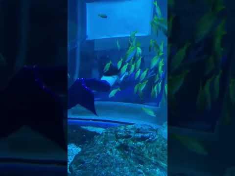 Dubai Aquarium & Underwater Zoo.   #shorts