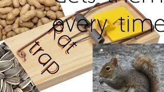 How To Make An Easy Squirrel Trap