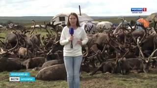 """""""Россия-1 Нарьян-Мар HD"""" День оленя на Канине. Кочевники отметили главный праздник."""