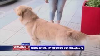 Canadá Aprueba Ley Para Tener Sexo Con Animales