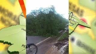 Duas arvores caíram na CE 377, estrada que liga Limoeiro a Quixeré Próximo ao Tabuleiro Alto