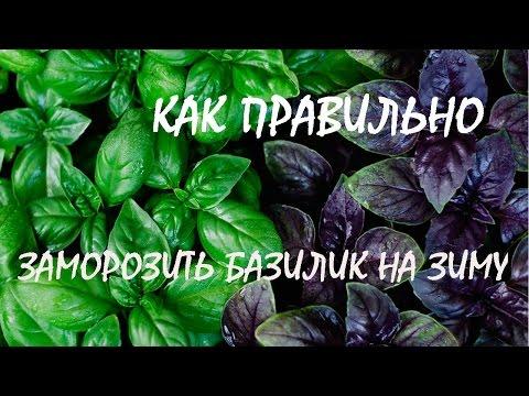 Как правильно заморозить базилик на зиму / how to freeze Basil