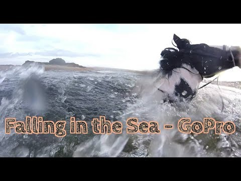 Horse and Rider Falling in the sea - GoPro - Brittas Bay Beach