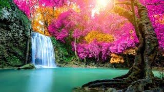 Beautiful Relaxing Music - Nature Sounds, Bird Sounds, Stress Relief, Sleep Music, Meditation Music
