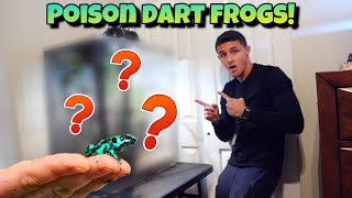 my-new-exotic-dart-frog-terrarium-crazy