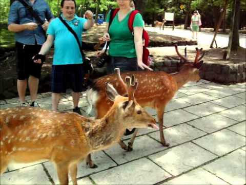 Kofukuji Temple and Nara Deer Park