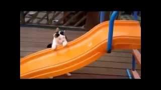 Смешные кошки,смотреть видео про кошек,