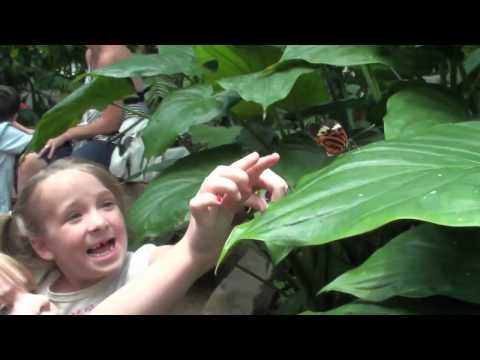 Butterfly Center, Houston Museum of Natural Science