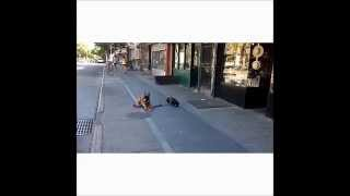Metro Dog Training practicing a long down with distractions in Williamsburg, New York City.