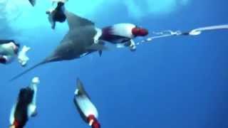 Trol Kameraya Yakalanan Kılıç Balığı  AvStokcom Av Marketi