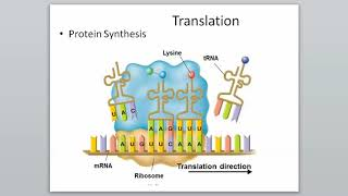 12-3 RNA and Protein Synthesis (Part 3)