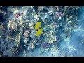 Что будет если трогать кораллы. Египет. Красное море.