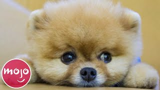 Top 20 Dog Breeds That Have the CUTEST Puppies