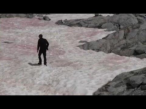 euronews (deutsch): Werden Gletscher zu rosa Riesen? Italien staunt über Algenart