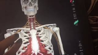 Complete Anatomy 2019 app review