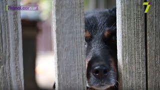 Жестокое обращение с животными: работают ли принятые законы
