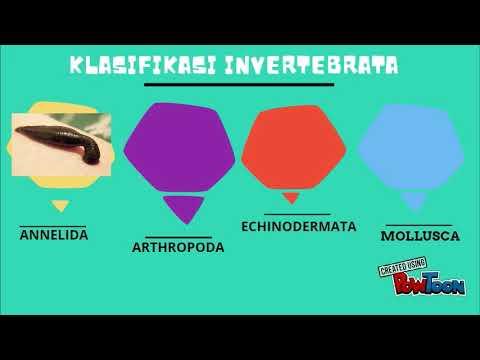 Image of: Diagram Klasifikasi Kingdom Animalia Youtube Klasifikasi Kingdom Animalia Youtube