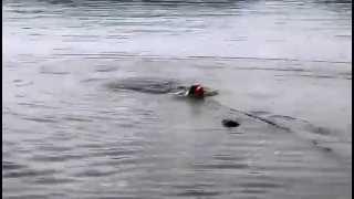 支笏湖で泳ぎを満喫したマリィ!