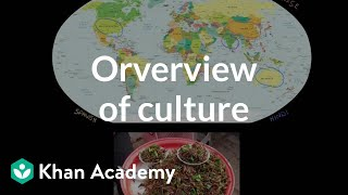 Overview of culture | Society and Culture | MCAT | Khan Academy