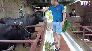 Làm sao để KHỞI NGHIỆP chăn nuôi bò HIỆU QUẢ & Tư vấn kỹ thuật chăn nuôi cho trại