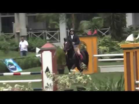 Land Affair (Landritter) CSN Agromen/1 1,00m - Cavalo de Salto a Venda
