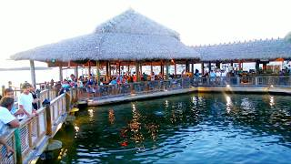 Islamorada Fish Company waterfront, great food, great sunsets on the bay, watch the Tarpon & sharks