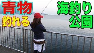 魚影濃すぎる堤防でショアジギングした結果!?敦賀新港海釣公園
