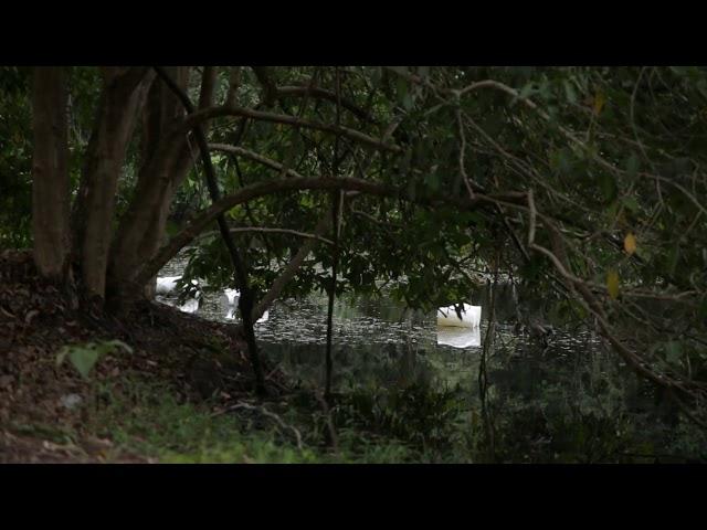 09 CORPOS - Vigilância