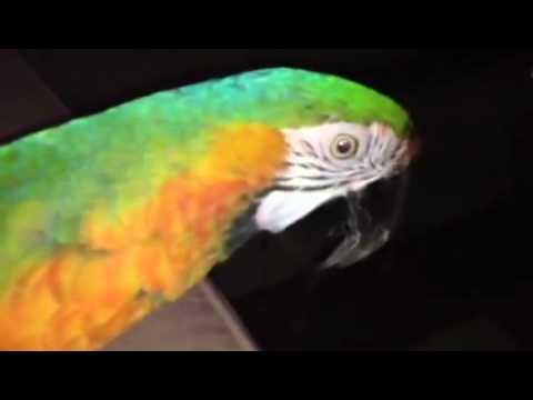 Diego My Macaw