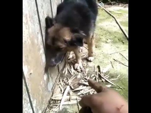 Digigit Binatang Peliharaannya, Bapak Asal Toraja Ini Curhat di Medsos, Simak Videonya