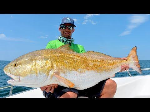 Found Over 10,000 MASSIVE Redfish!!