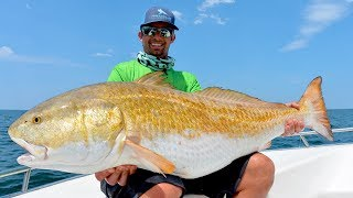 Found Over 10,000 MASSIVE Redfish!!