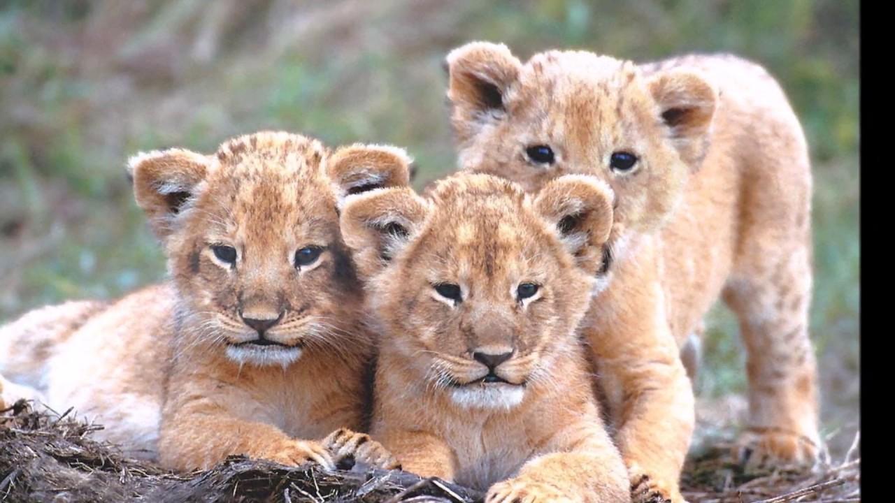 Préférence Adorables bébés animaux sauvages . - YouTube WL39