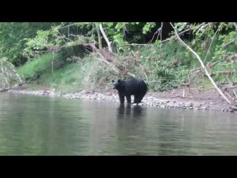 Black Bear Sighting on Delaware  River