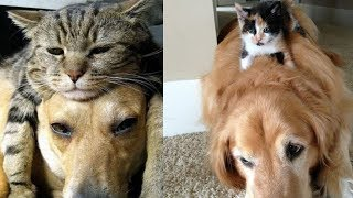 Cats Who Are Determined To Nap Wherever They Want, No Matter Who's In The Way