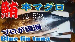 本マグロのさばき方(Blue fin tuna)【まぐろの刺身、まぐろの握り3種】12.5kgの本鮪入荷!
