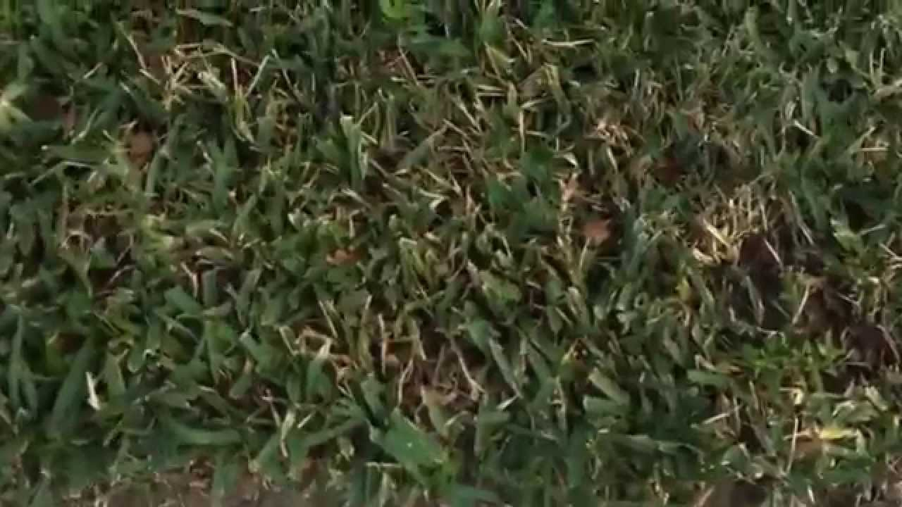How to get rid of ground moles - Gopher Gasser How To Get Rid Of Moles And Gophers