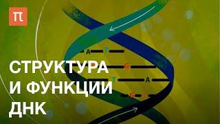 Фото Структура и функции ДНК — курс Максима Франк-Каменецкого ПостНаука