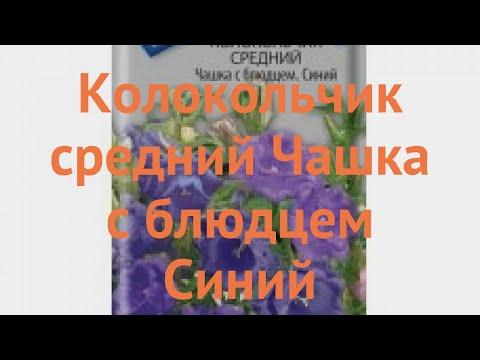 Колокольчик средний Чашка с блюдцем Синий �� обзор: как сажать, семена колокольчика