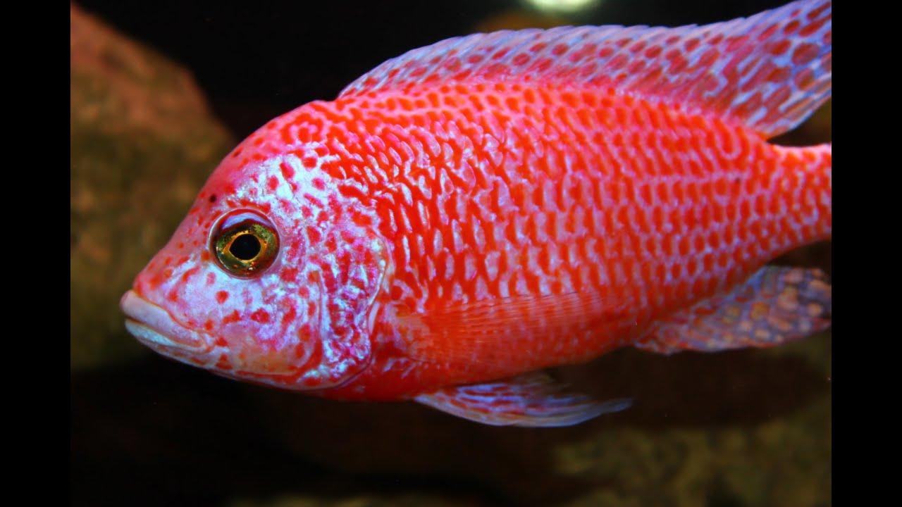 AWESOME BEAUTIFUL AQUARIUM FISH - YouTube