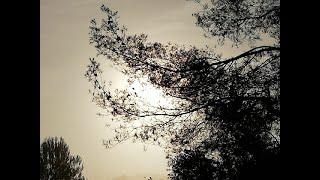 J.K. Mertz, Nocturne nº2  Op. 4 (i...