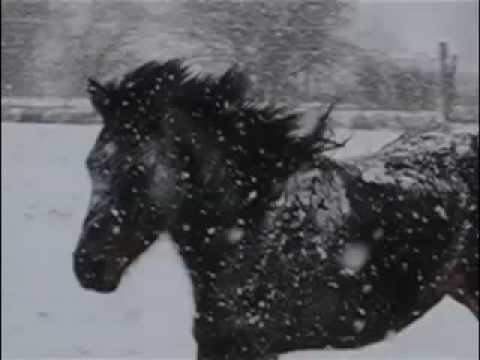 Saladín, A Snow Energized Arab.mov